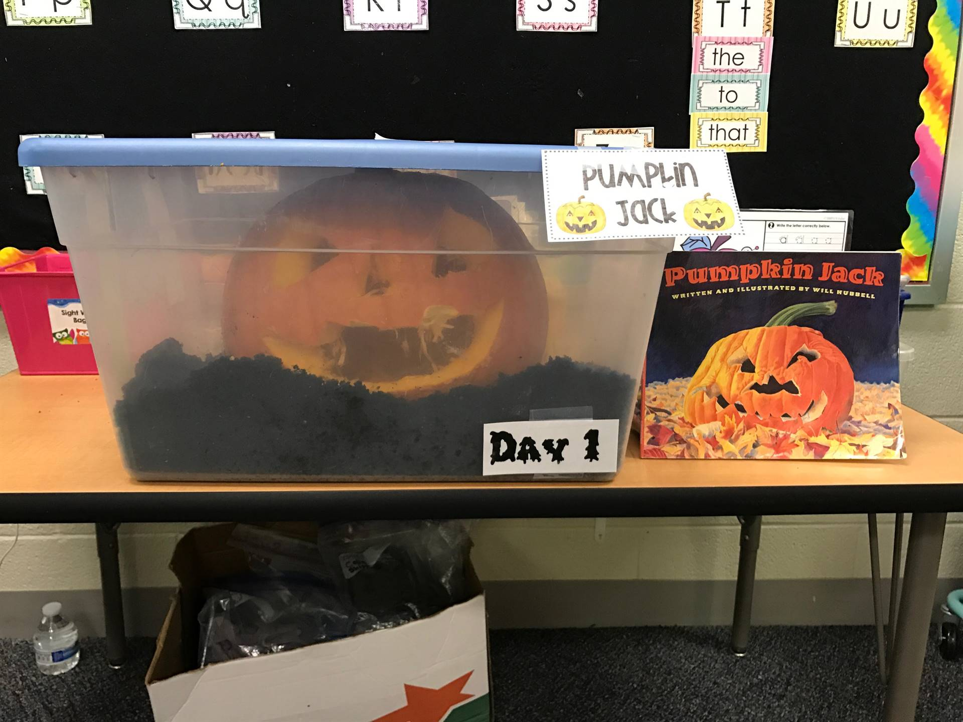 Day 1 of Pumpkin Jack