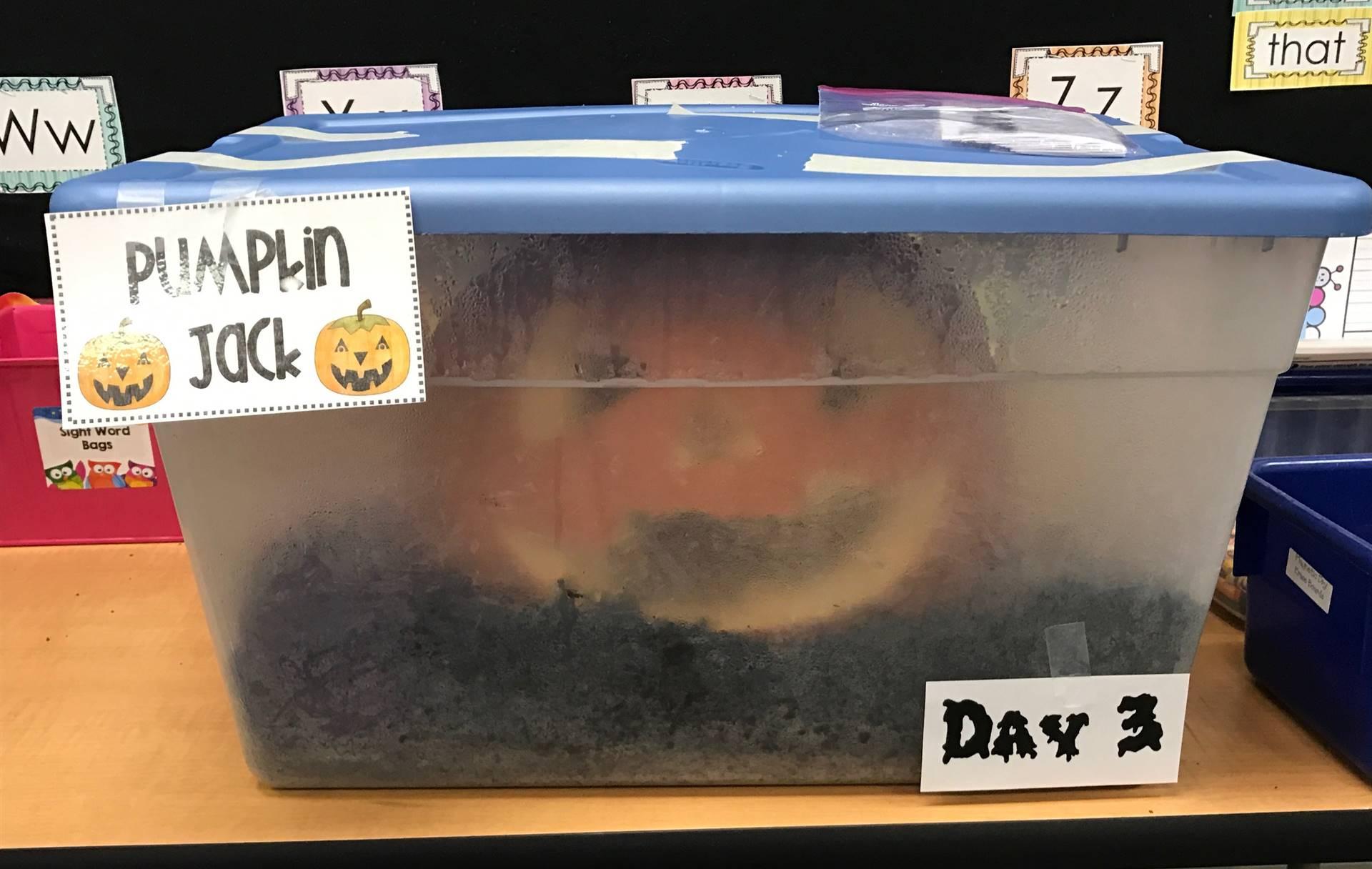 Day 3 of Pumpkin Jack