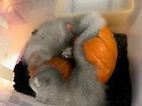 PUmpkin Jack Day 9 inside the bin!