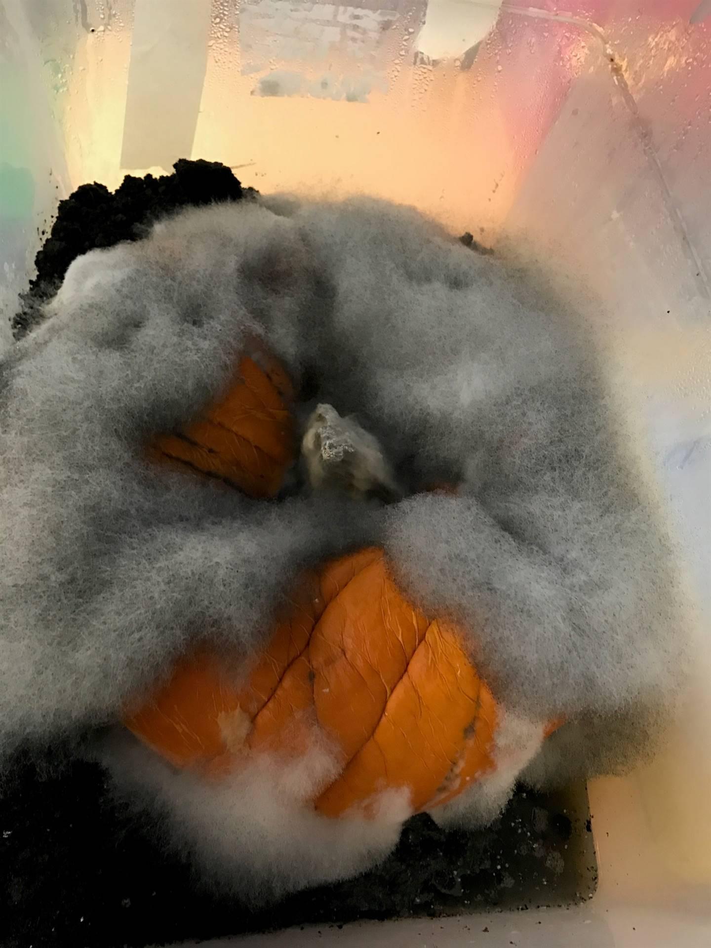 Day 10 Pumpkin Jack