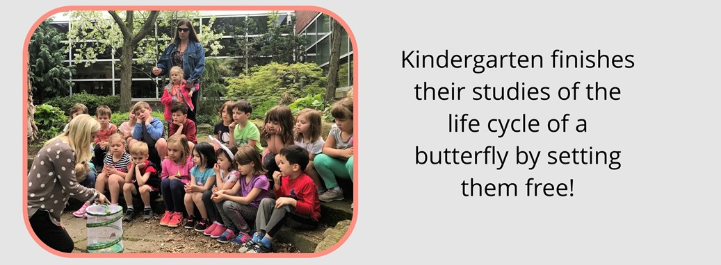 Kindergarten Studies the Life Cycle of a Butterfly and are Now Setting Them Free