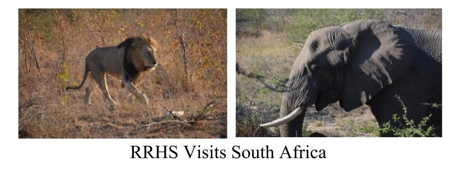 two pictures from south african safari; one is of a lion the other an elephant.